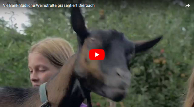 video dierbach vr bank
